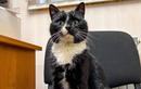 Chú mèo may mắn trở thành Thứ trưởng Danh dự sau khi thoát chết