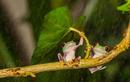 """""""Lác mắt"""" với những màn trú mưa siêu đáng yêu của động vật"""