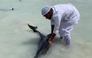 Giải cứu đàn cá heo bỗng dưng mắc cạn trên... cát