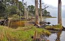 """Nan giải hiện tượng cây cối chết, biến thành """"rừng ma"""" ở Mỹ"""