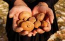 Loại nấm quý như kim cương khiến người Iraq bất chấp bom, mìn để săn