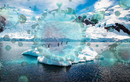 Băng ở Bắc Cực dần tan chảy, thảm họa khủng khiếp nào xảy ra?