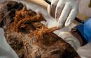 Phát hiện sốc về xác xướp Ai Cập: Lịch sử có thể phải viết lại!