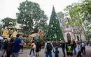 Chiêm ngưỡng những cây thông khổng lồ tại Hà Nội trước Giáng sinh