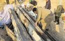Phát lộ mộ cổ thời Trần tại Quảng Ninh
