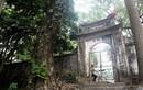 Chuyện ly kỳ cây sưa trăm tỷ mặc áo giáp sắt ở Hà Nội