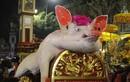 """Video: """"Ông lợn"""" La Phù được cho ăn sang, ngủ mắc màn đợi ngày rước"""