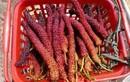 Quả ớt kỳ lạ trả hơn trăm nghìn 1 kg mới bán