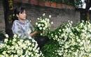 Loài từng là hoa dại ven đường thành đặc sản Hà Nội