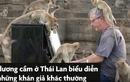 Video : Người đàn ông chơi piano cho hàng trăm con khỉ