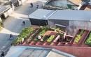 Giải thưởng kiến trúc 2020, 2 ngôi nhà ở Việt Nam giành chiến thắng