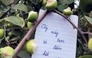 Giới trẻ vào vườn táo cắn nham nhở lại còn để lại bút tích