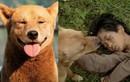 Ai nói chó ta không đủ khôn để đóng phim như chó Nhật?