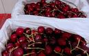 Cận Tết, hoa quả ngoại đầy ắp các siêu thị, người mua thưa vắng