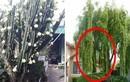 Nhà trồng 3 cây này là con cưng Thần Tài, cuộc đời giàu có