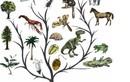 Tại sao sự tiến hóa làm cho sinh vật thông minh hơn?