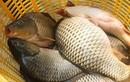 Loại cá đại bổ giàu chất dinh dưỡng bậc nhất