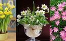 6 loại cây chứa nhiều sát khí, chớ dại trồng trong nhà kẻo tán lộc