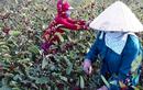 Trồng cây lạ chơi hoa, sau vài năm nhân giống người dân thu hàng trăm triệu