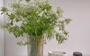 Mới lạ hoa cà rốt, thu hút nhiều bà nội trợ mua về cắm