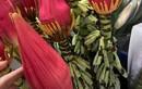 Dân Hà thành chuộng mua hoa chuối rừng về cắm chơi Tết