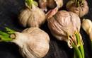 Thường xuyên ăn tỏi mọc mầm tốt cho sức khỏe, ngăn ngừa đột quỵ