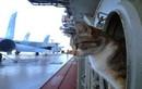 Mèo trên tàu chiến: Như một chiến binh, có trang bị, nhiệm vụ rõ ràng