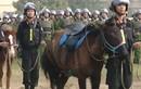 Cảnh sát Cơ động Kỵ binh Việt Nam được trang bị giống ngựa từng chinh phạt châu Âu?