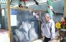 Bí ẩn câu chuyện cá voi cứu người ở Bến Tre