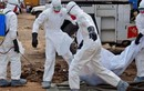 Nóng: Ebola bùng phát trở lại tại Congo