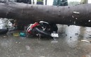 Đã có người chết trong cơn bão số 9 ở TP.HCM