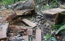 Chùm ảnh: Gỗ bị đốn hạ la liệt ở khu bảo tồn thiên nhiên