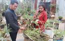 Chàng trai Hà Nội và duyên nợ với hồng bonsai