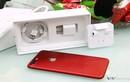Có nên mua iPhone 7 màu đỏ đang sốt lúc này?