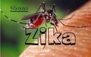 Phát hiện 20 trường hợp nhiễm virus Zika tại TP HCM