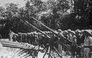Chiến tích Sư đoàn 308 xóa sổ tiểu đoàn Mỹ ngụy ác ôn nhất