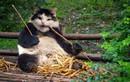 """Mèo cưng hóa thành """"quái vật lai"""" ấn tượng bất ngờ"""