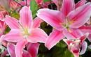 5 loại hoa cấm để lên bàn thờ tháng 7 âm kẻo đắc tội thần linh, càng làm càng lụi
