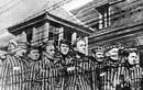 Phát hãi những thí nghiệm trên người của phát xít Đức