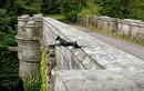 Kỳ bí cây cầu khiến nhiều con chó tìm đến cái chết