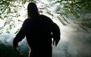 Vì sao con người khó bắt được quái vật Bigfoot?