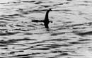 Quái vật hồ Loch Ness bị săn lùng điên cuồng chỉ là dàn dựng?