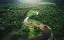 Điều bất ngờ về khu rừng nhiệt đới Amazon nổi tiếng thế giới