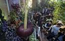 Bí mật gây sốc về loài cây có hoa cao nhất thế giới