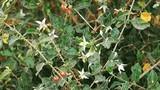 Phòng chống đau khớp bằng thảo dược