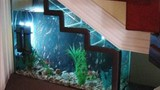 Phong thuỷ: Lưu ý khi đặt bể cá dưới gầm cầu thang