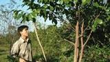 Công nghệ tạo trầm hương của Việt Nam