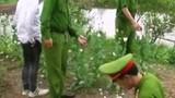 Trồng thuốc phiện trong vườn: Cố ý hay không biết?
