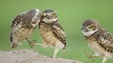 Những bức ảnh siêu hài của động vật (P11)