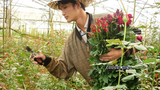 Hoa Đà Lạt ngắc ngoải vì hoa... Trung Quốc